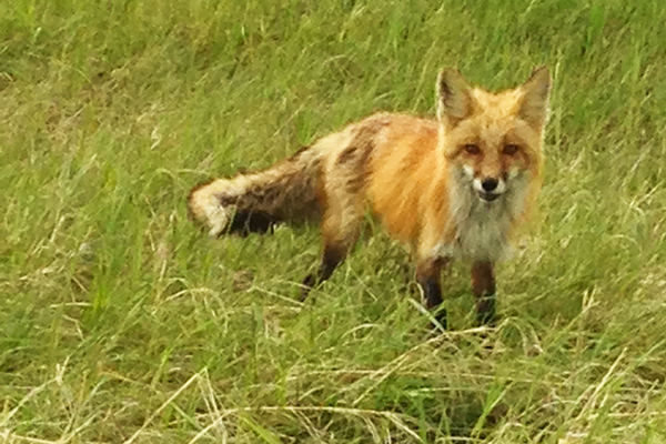 Fox4Article