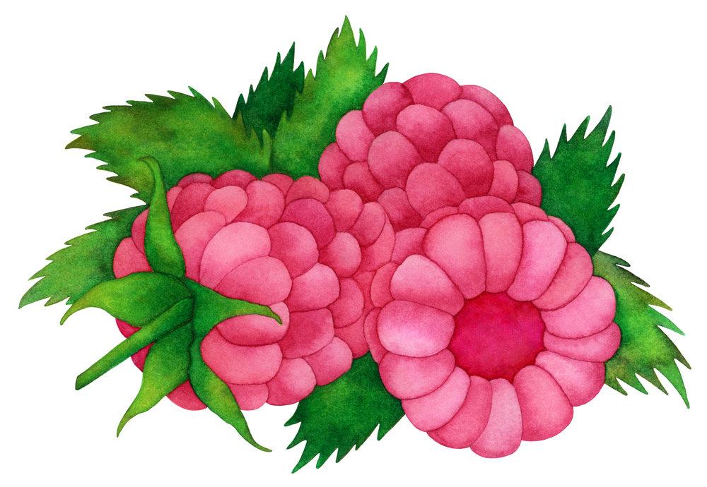 randizafmanraspberriesWEB.jpg