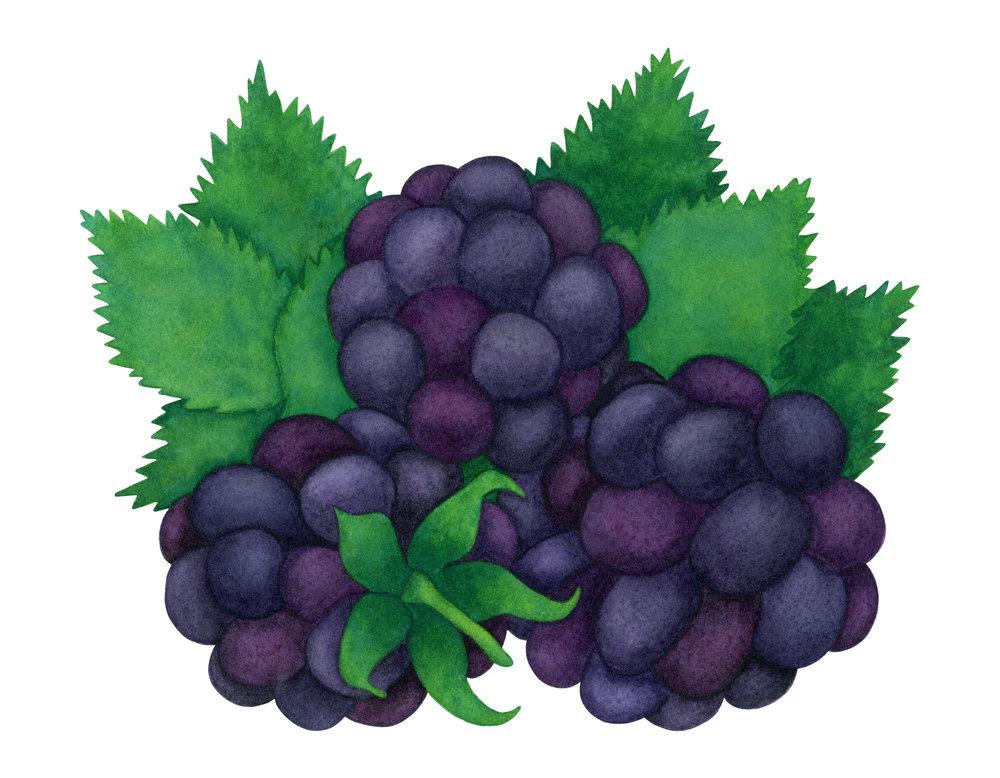 randizafmanblackberries2500WEB.jpg