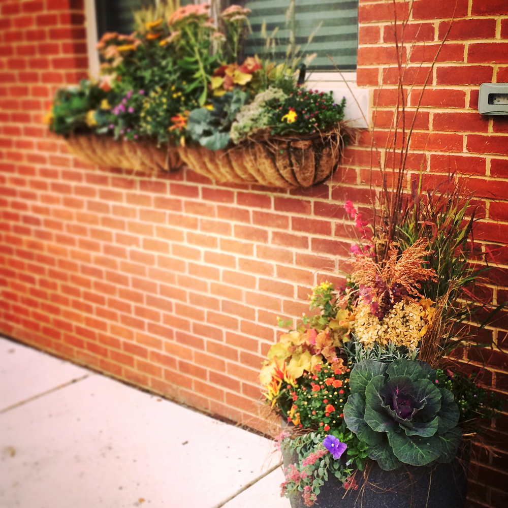 Beautiful planter and window box combo outside a home in the Fairmount neighborhood of Philadelphia