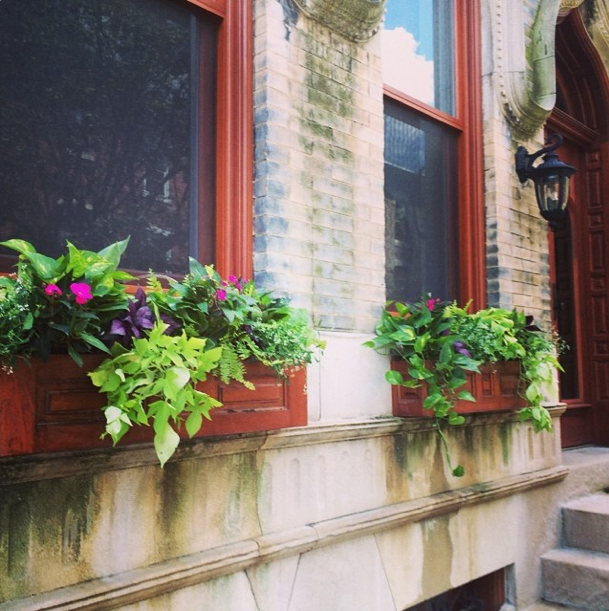 Window boxes in Rittenhouse Square in June