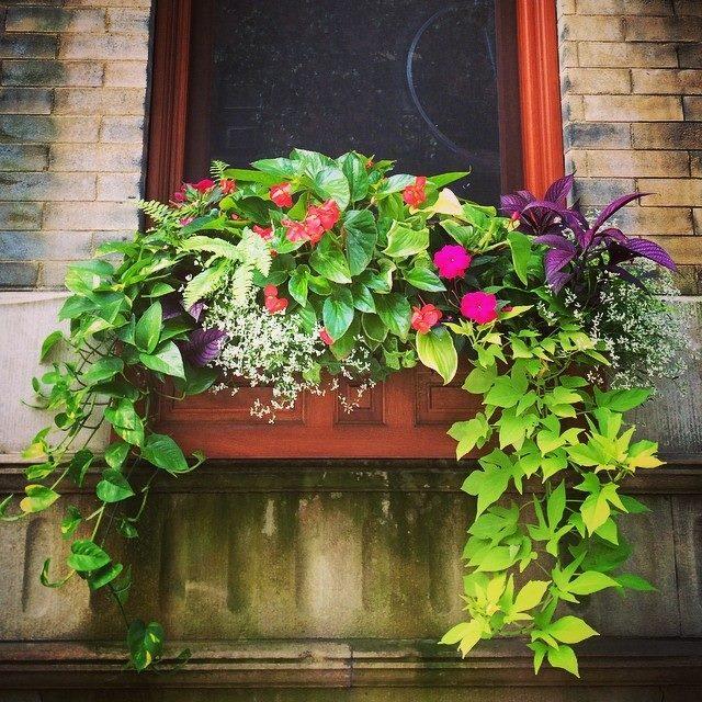 Rittenhouse window box in July