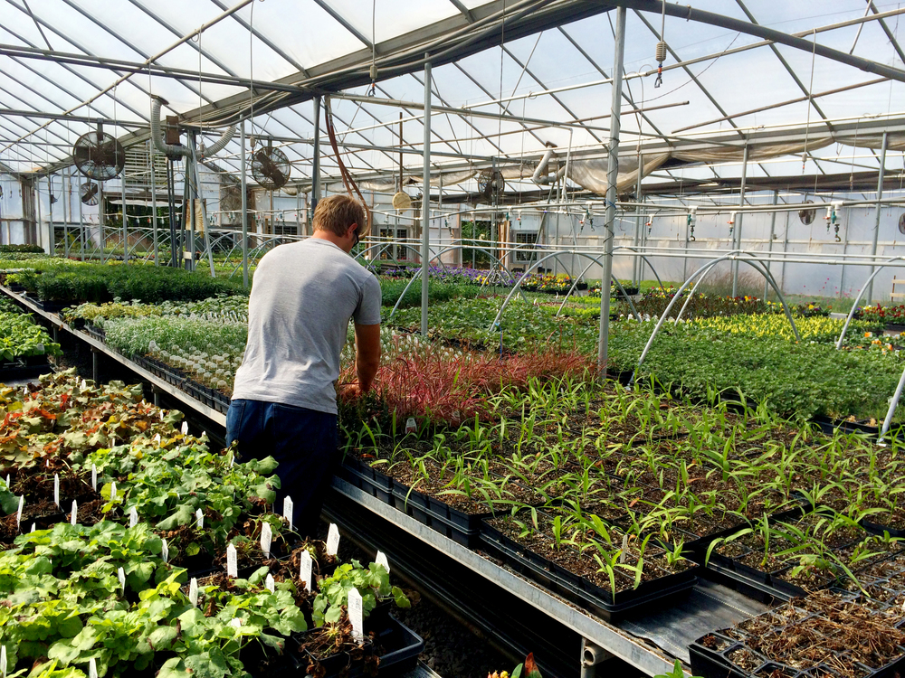 Caring for our plants.  We demand that the quality of our plants is to the absolute highest standards.