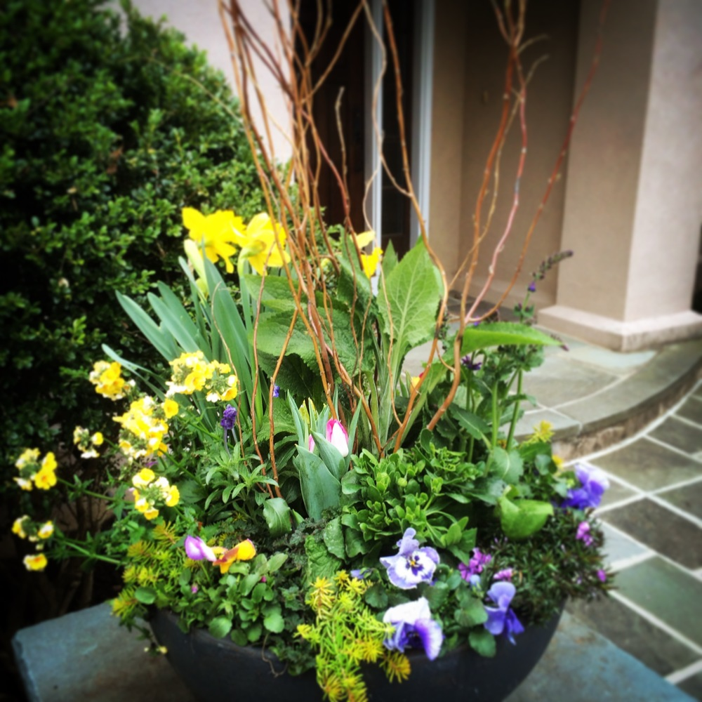 Spring flowers and bulbs in this planter.