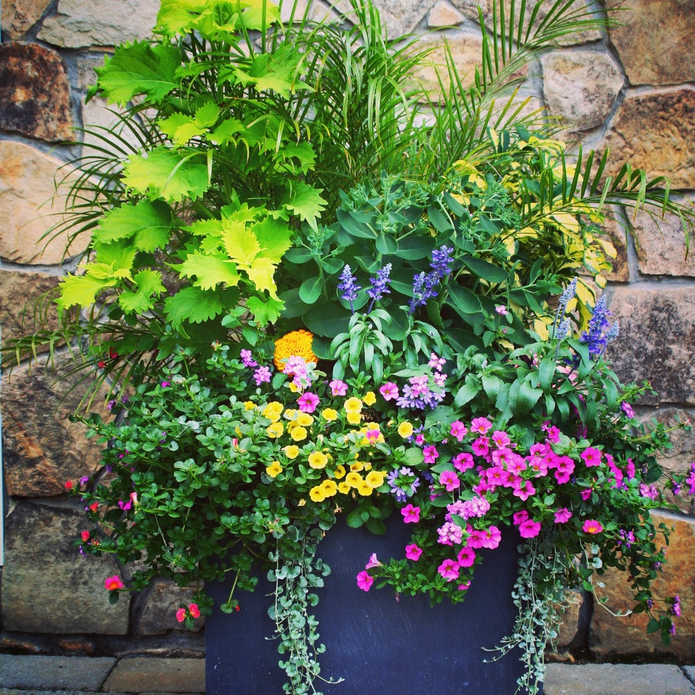 See a complete portfolio of our planters and window boxes.