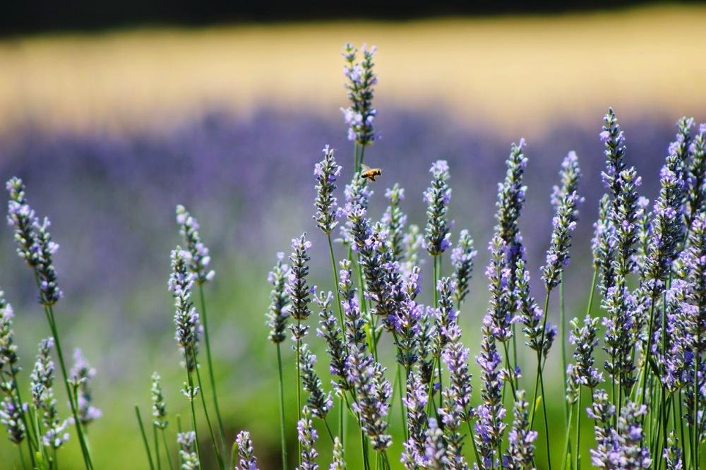 little+buzzing+bee.jpg