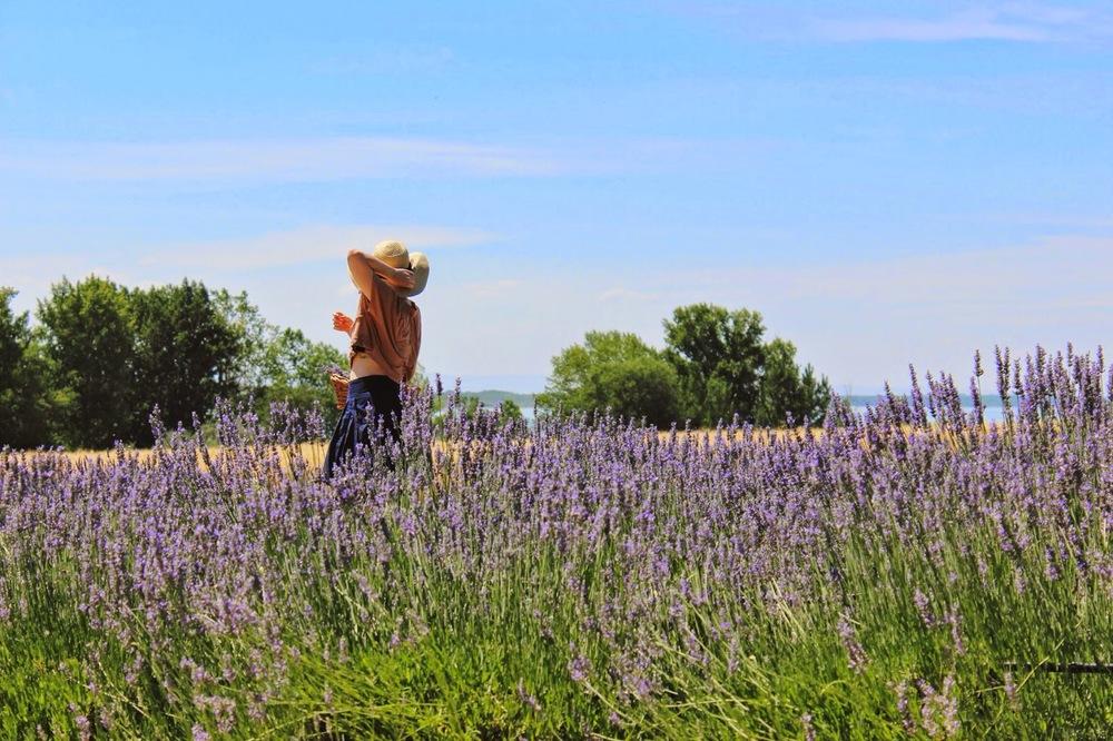 lakeside+lavender.jpg