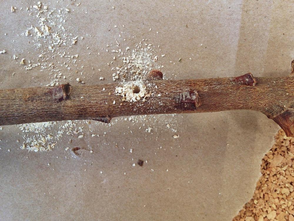 hole+in+branch.jpeg