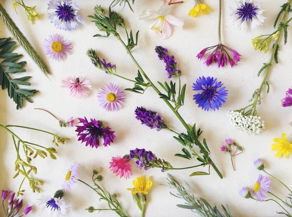 foragedboisewildflowers