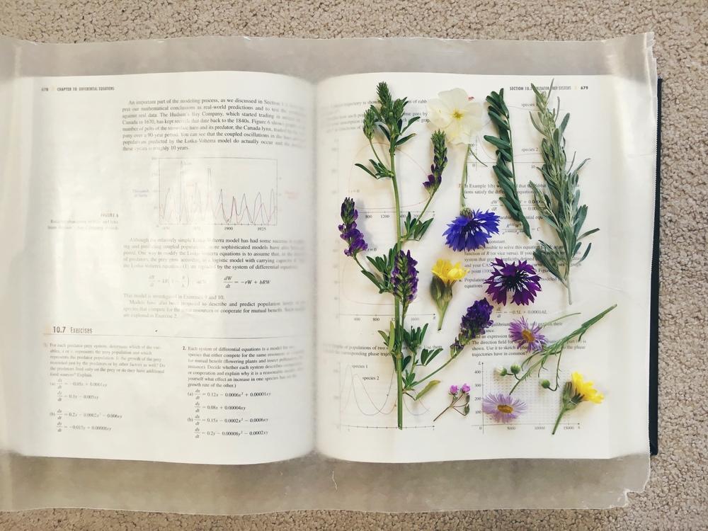 pressingtheflowers