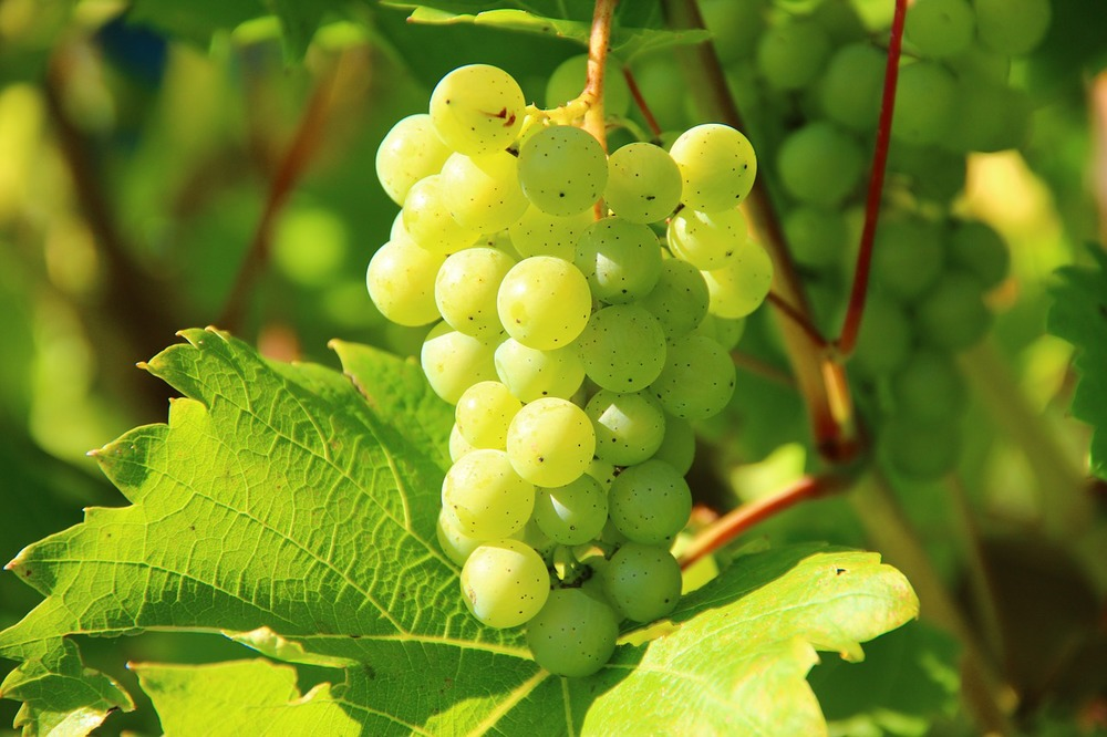 green-grapes-276070_1280.jpg