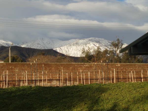 Trellised vineyards