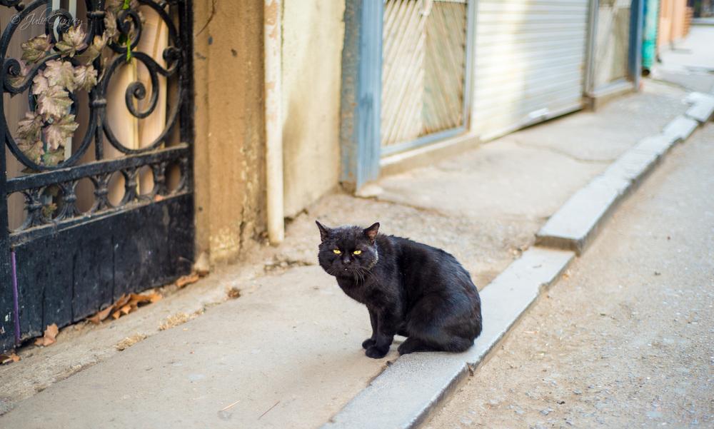 CATS (FAV)-Tbilisi-Online-0689.jpg