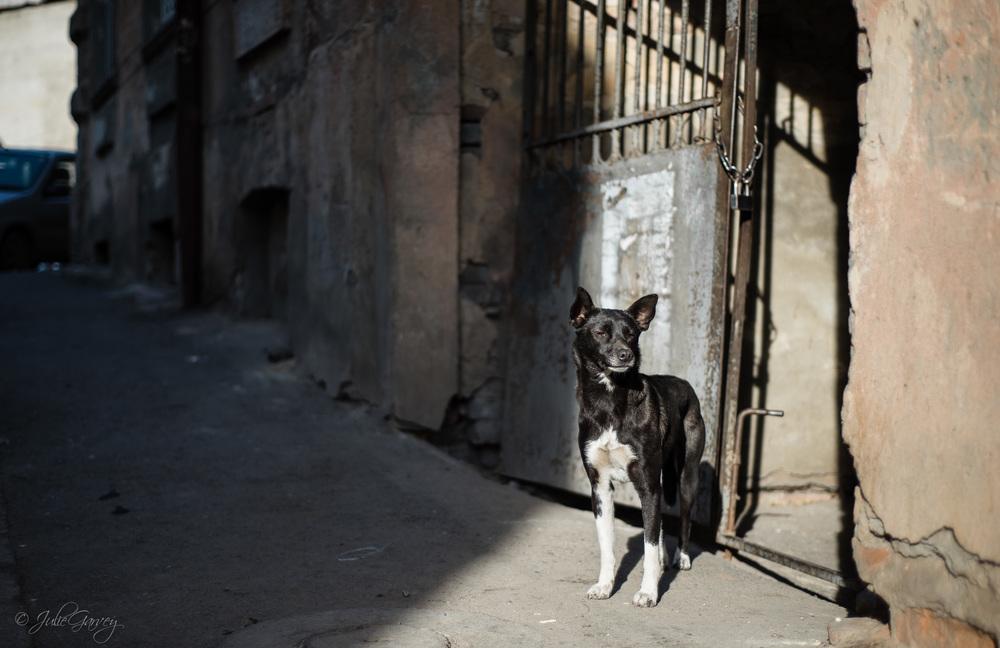 DOGS (FAV)-Tbilisi-Online-0835.jpg
