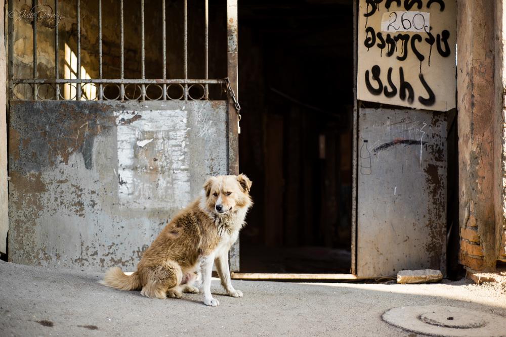 DOGS (FAV)-Tbilisi-Online-1266.jpg