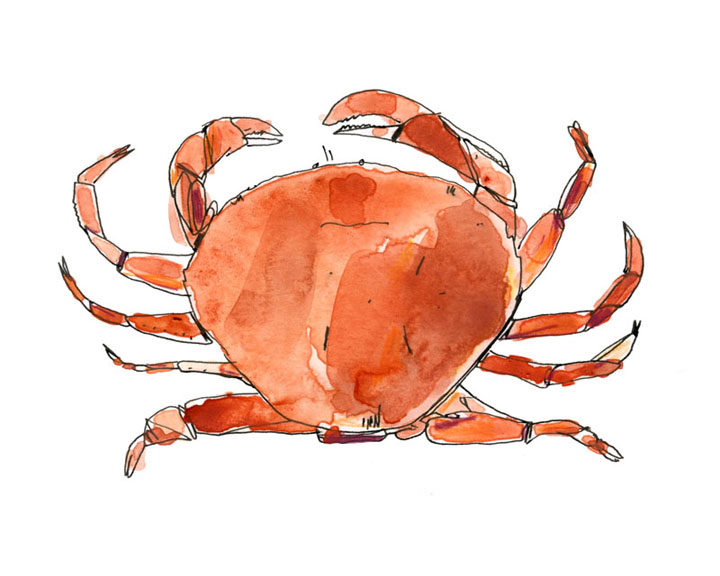 Dungeness Crab-72.jpg