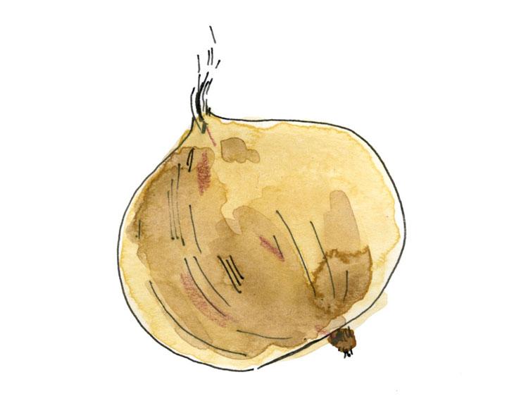 onion-72.jpg