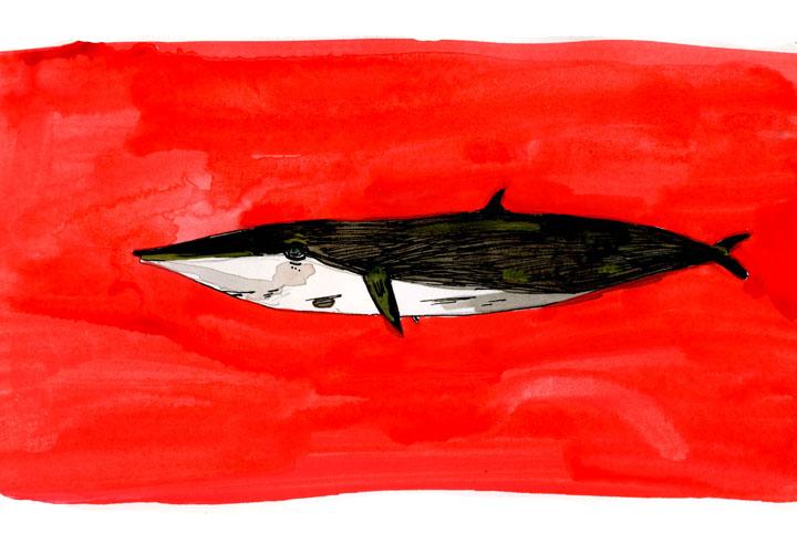 whale13-small.jpg