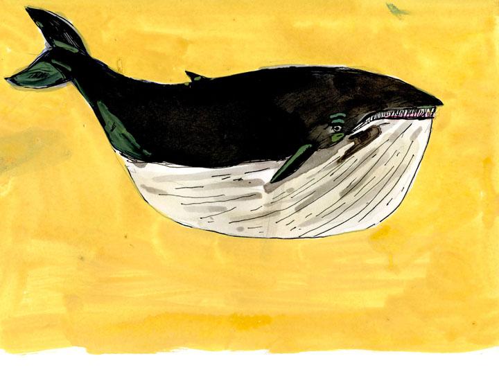 whale12-small.jpg