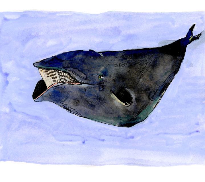 whale10-small.jpg