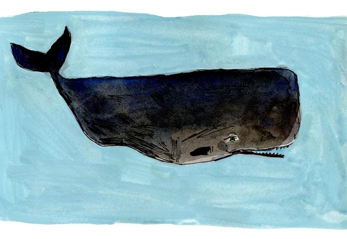 whale8-small.jpg