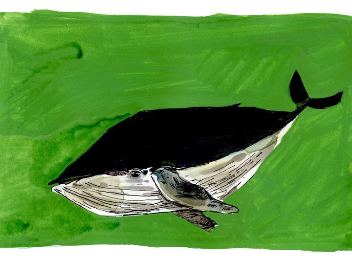 whale7-small.jpg