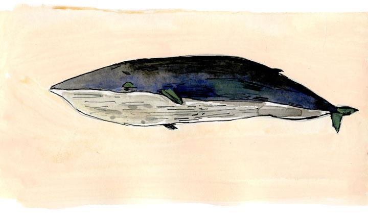 whale3-small.jpg