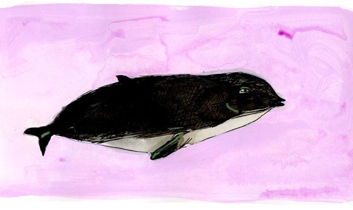 whale1-small.jpg