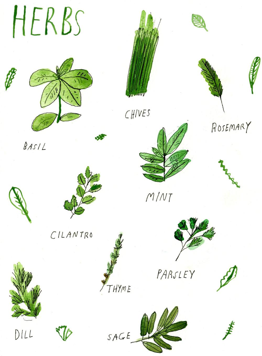 herbs-72.jpg