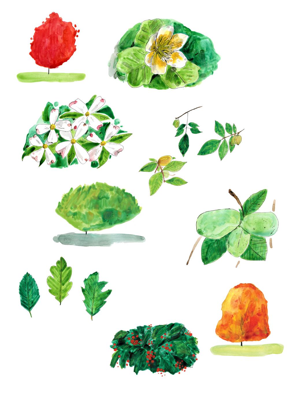 casey trees illustrations.jpg