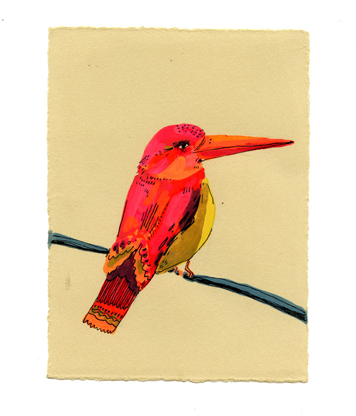 RUFOUS BACKED KINGFISHER