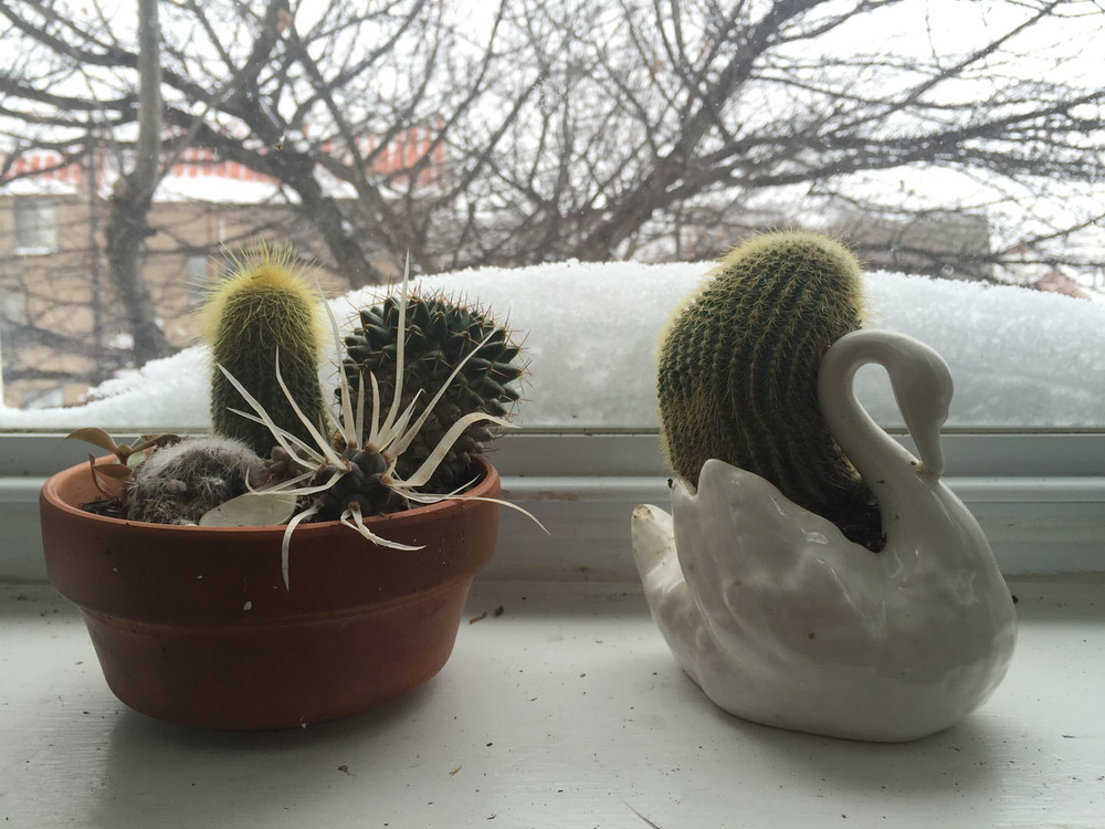 snow day plants