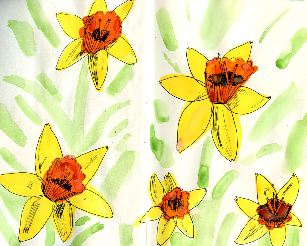 daffodils sketchbook
