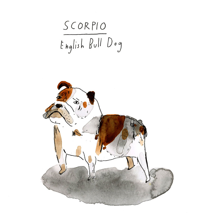 Scorpio-English-Bull-Dog-web.png