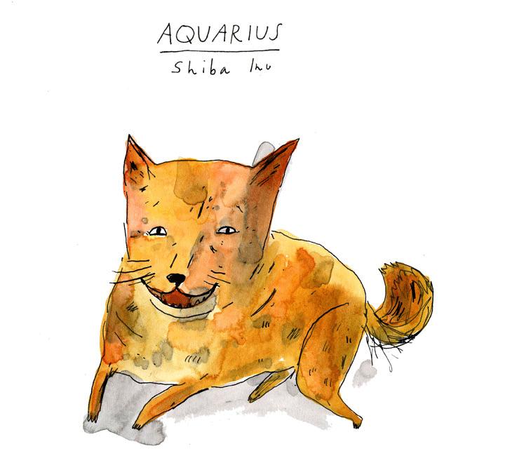 Aquarius--Shiba-Inu-web.png
