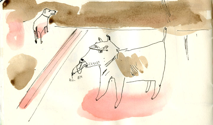 sketchbook dogs1-august2014-72.jpg