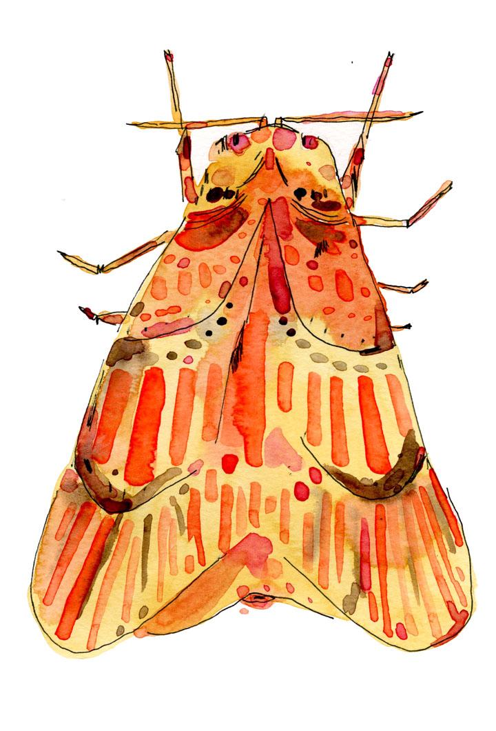 patterned moth illustration