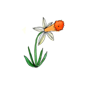 daffodil illustration