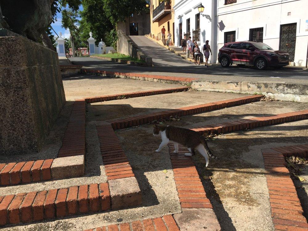 cats of san juan