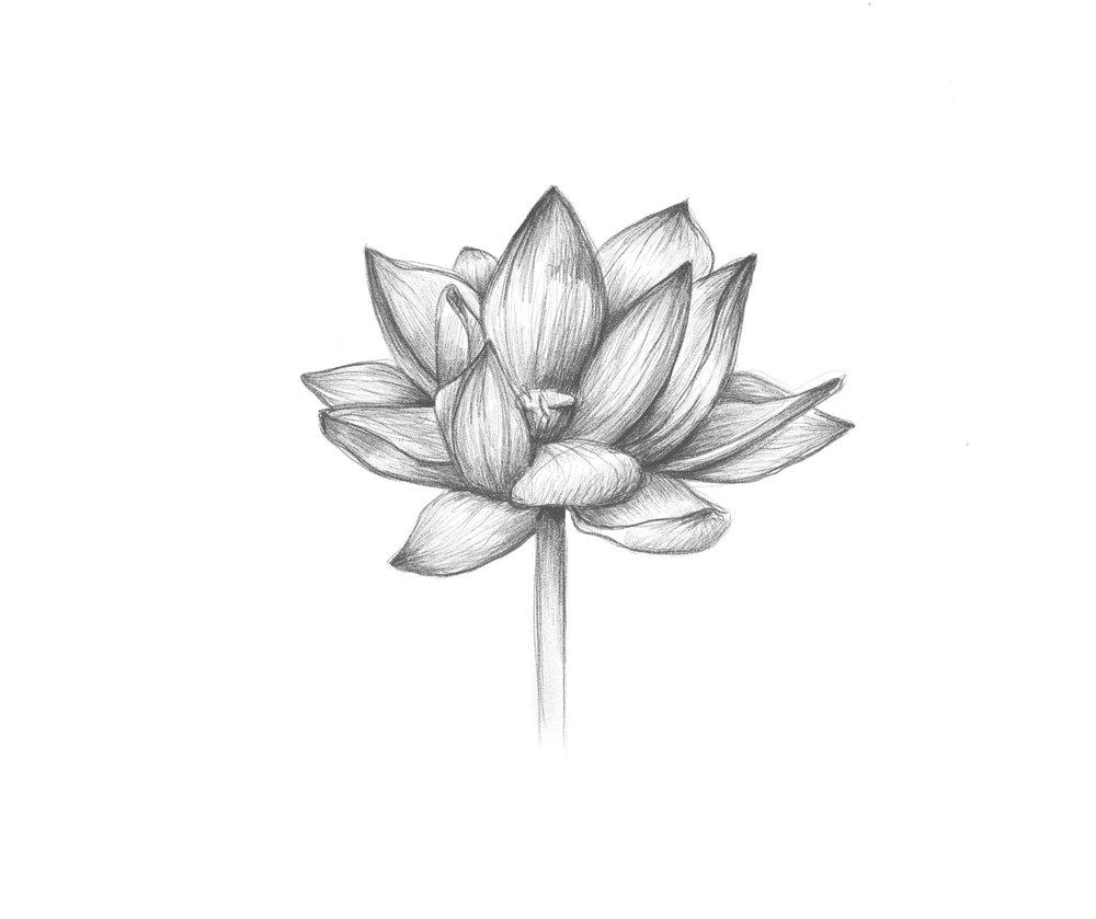louks_flower.jpg