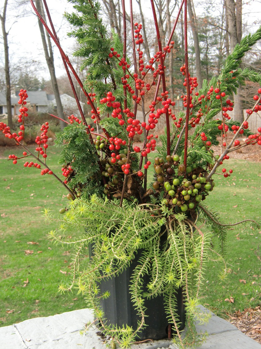 How To Create Your Holiday Containers Garden Pics And Tips
