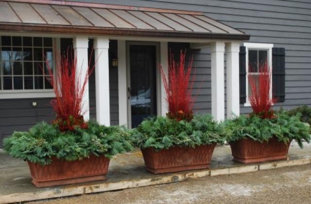 Tips for Winter Pots Enchanted Gardens