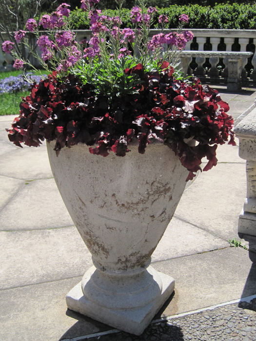 A pot of wallflowers and burgundy heuchera is simple yet stunning.