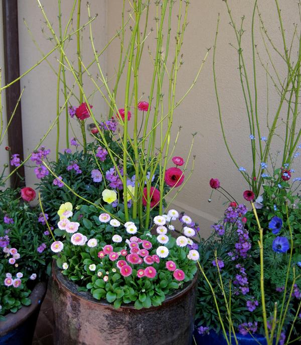 Nothing says spring like English daisies, ranunculus, pansies, willows