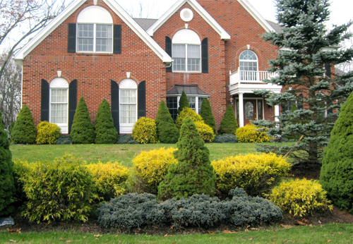Blue star glitters in the winter landscape enchanted gardens for Juniper house garden design