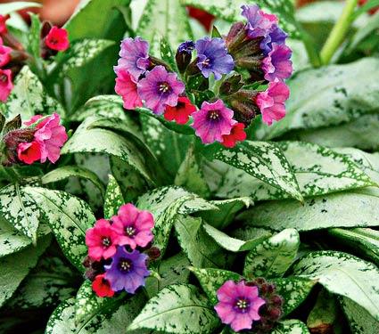 Nine New Perennials For Your Spring 2014 Garden Enchanted Gardens