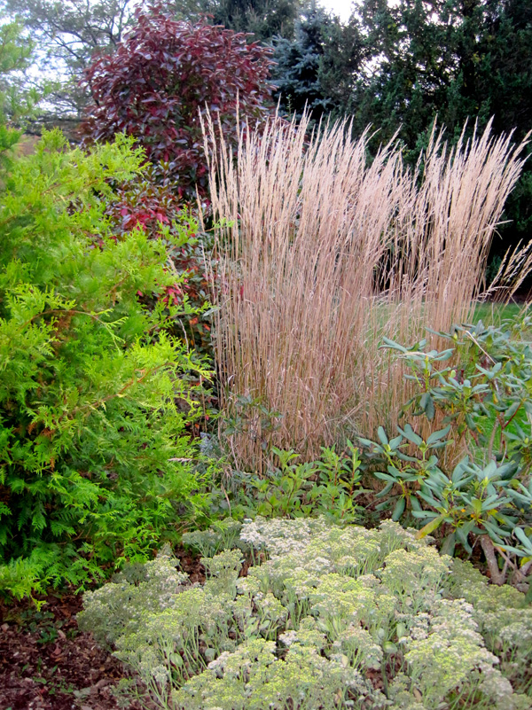 'Karl Forrester' grass with gold arborvitae, viburnum 'Winterthur' and variegated sedum