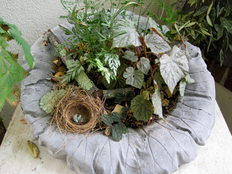 A miniature container garden in a cement leaf.