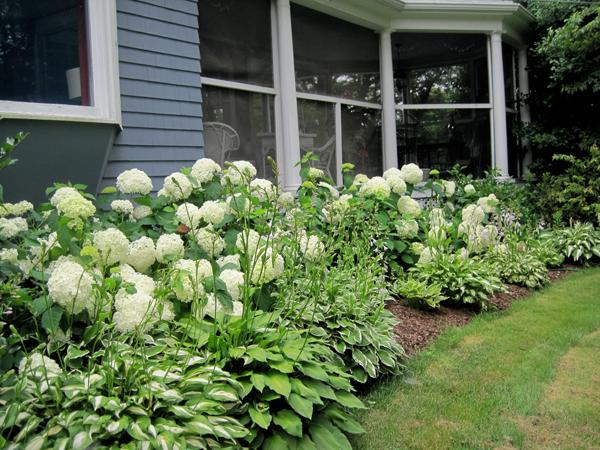Annabelle's Garden - Blumen