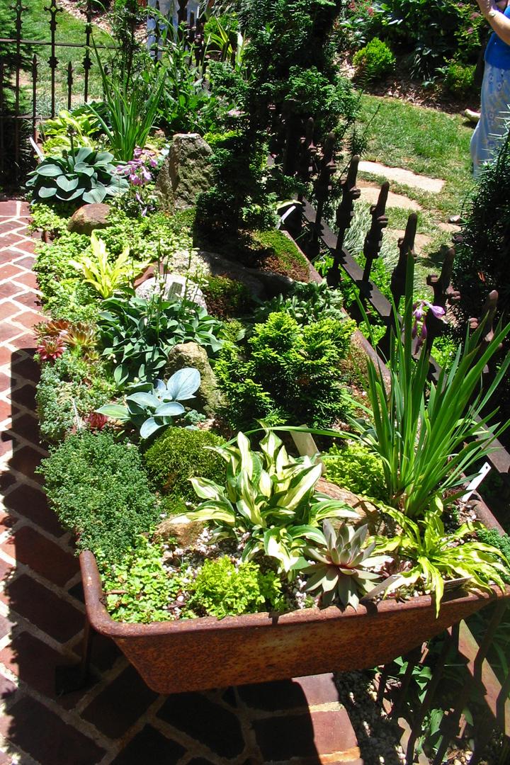 Miniature Hostas Its A Small World Enchanted Gardens